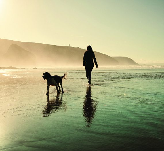 10 of the best dog friendly holidays