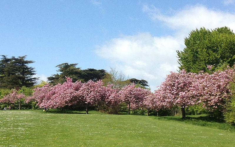 Stanmer Park, Brighton